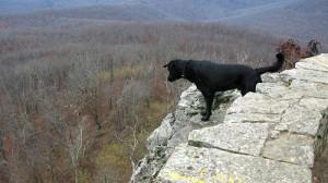 cliff-dog-300x168