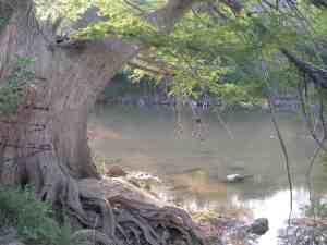 tree-river