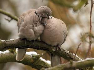 Sleeping_Birds_Wallpaper__yvt2