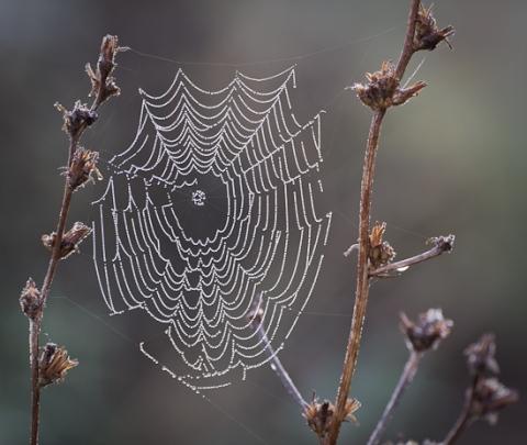 Dewey Web