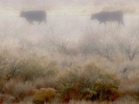 cows_in_the_fog_by_whendt-d4otbd6