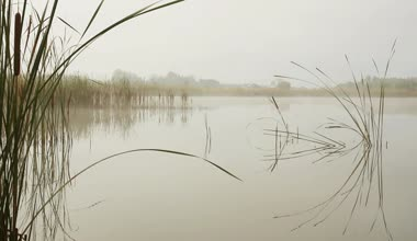 depositphotos_38722137-Lake-landscape-in-mist---stems-of-reeds-reflected-in-water