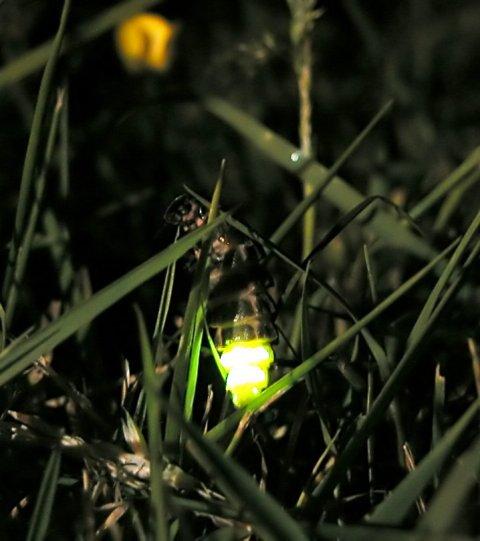 Glow_worm_305654931