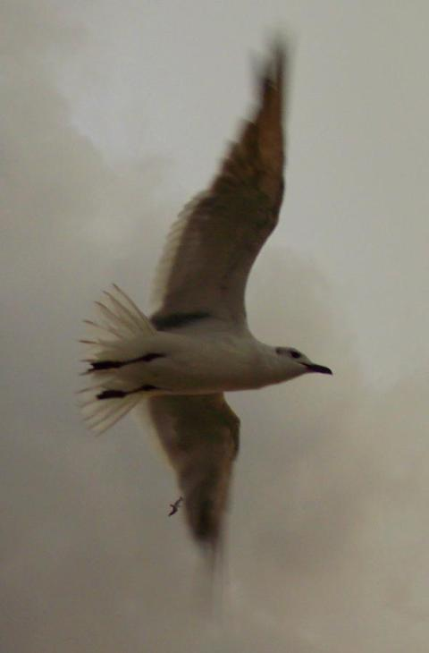 seagull-mist-sheri-mcleroy