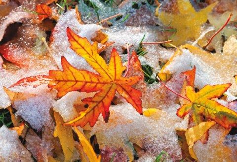 51410-10-frozen-autumn-leavs_sub