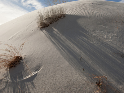 diane-cook-len-jenshel-low-angle-view-of-sunlight-and-shadows-on-a-round-sand-dune-with-clumps-of-grass