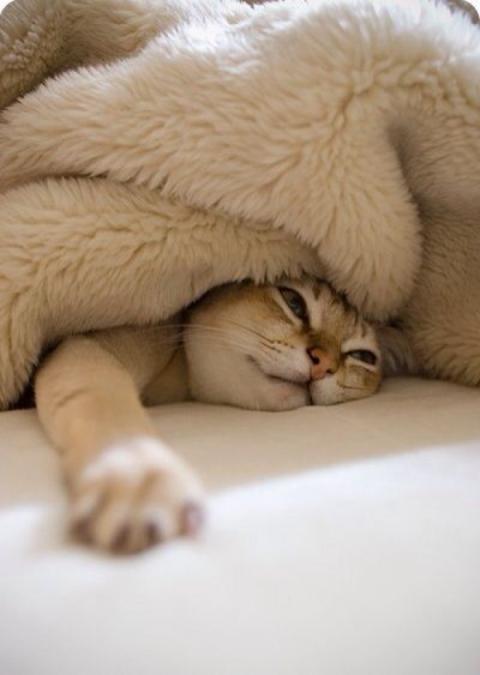l-Sleeping-Cat