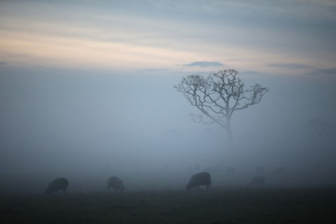 Winter+Mist+Descends+Cheshire+Countryside+P2YCtgfnqbel