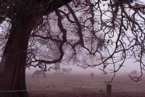 danita  cahill horses mist