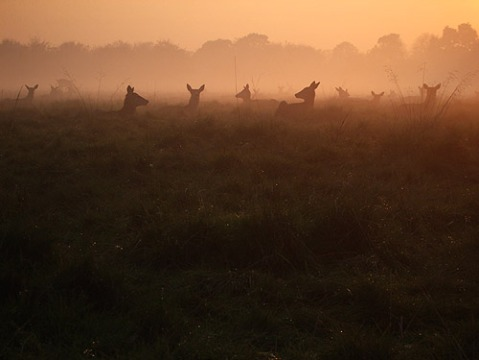 deeratduskinrichmondpark