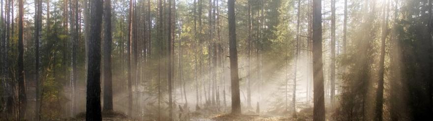 wood_sun_light_pools_trees_spring_high_water_dual_3840x1080_hd-wallpaper-53613