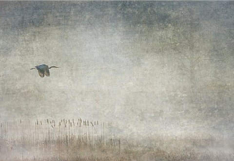 fog-and-blue-heron-jeffrey-gibson