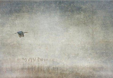 fog-and-blue-heron-jeffrey-gibson