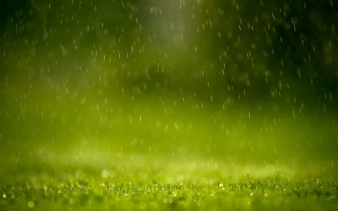 Spring_warm_rain_-_computer_background_photos