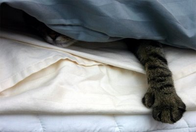 Cassie_hiding_under_the_covers.JPG