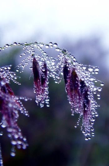 lavender-lilac-nature-photography-Favim.com-2572496