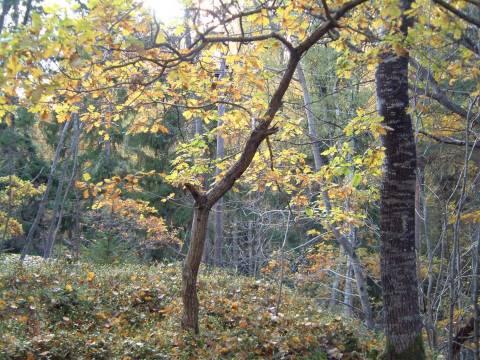 autumnwood4