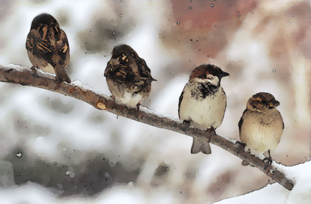 234-sparrow-on-branch-c2a9c2a9bing