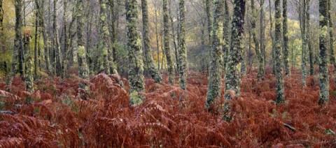 Lichen-Forest-Inverawe-600x266