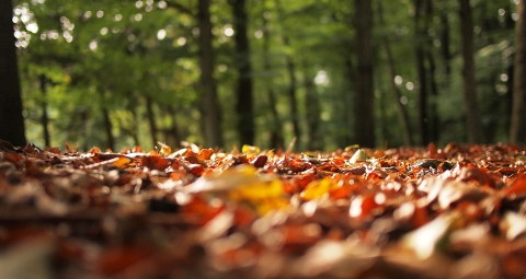 boss-fight-stock-images-photos-free-photography-leaves-forest.jpg