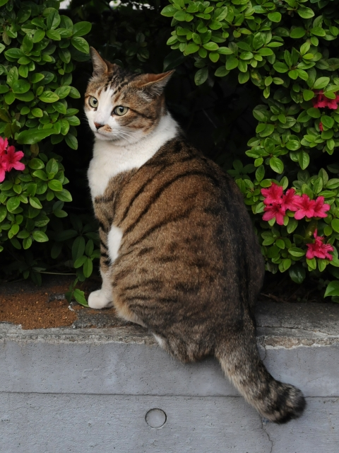 Brown_and_white_tabby_cat_and_flower_trees-Hisashi-01A.jpg