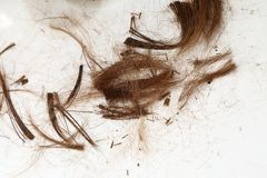cut-hair-floor-34527466.jpg