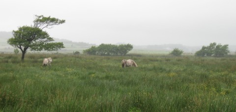 img_4046-ponies-on-the-fen-c-duncan-hutt.jpg