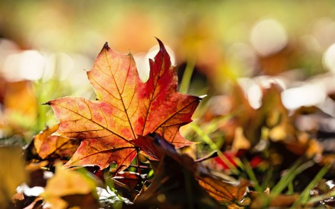 nature-leaves-maple-leaf-autumn-2560x1600-wallpaper