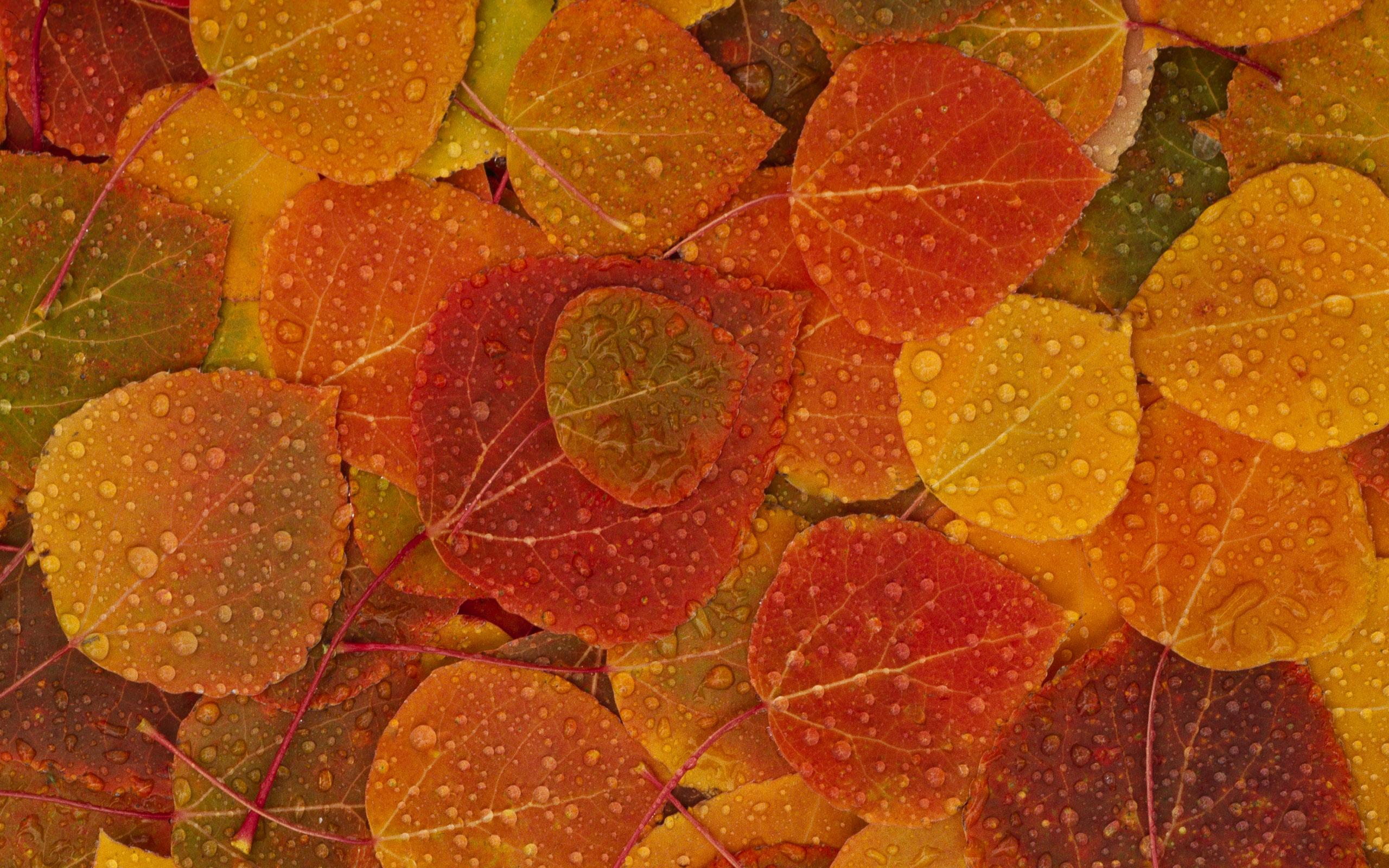 ws_fall_leaves_2560x1600.jpg