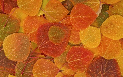 ws_fall_leaves_2560x1600.jpg
