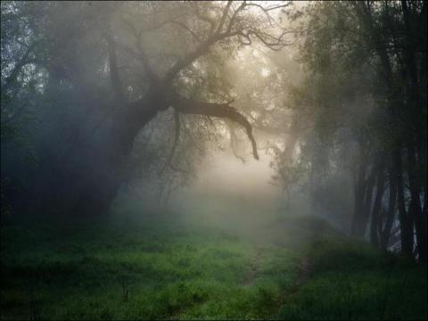 1024x768-Trees-In-Morning-Mist-Dl-HD