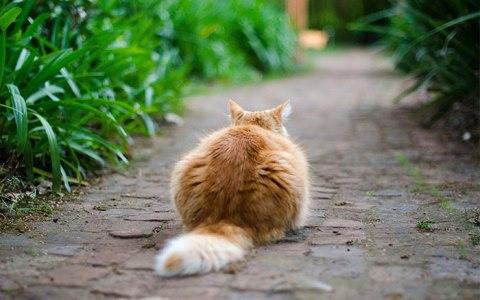 cat-in-the-garden.jpg