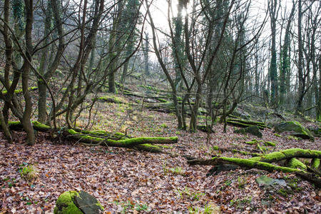 38111849-mossy-and-humid-european-forest-covered-with-fallen-trees-and-leaves.jpeg