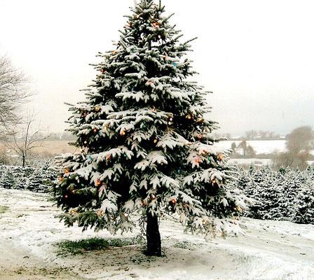 christmas_tree_with-snow
