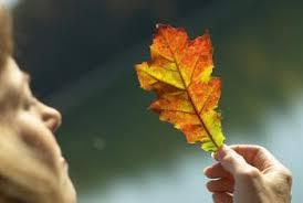 jpeg-leaf