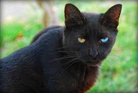 odd-cat-jpeg
