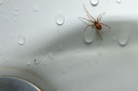 spider-sink-drain-jpg-838x0_q80