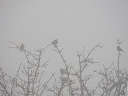 to_moineaux-dans-le-brouillard