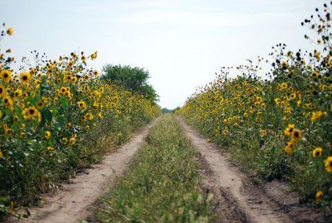 wildflowers-summer-environment_37377_600x450