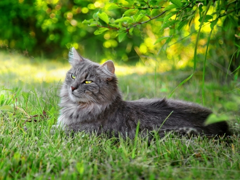 Lazy-Cat-Image-Kitten-Lying-Under-Green-Tree-Unwilling-to-Move.jpeg