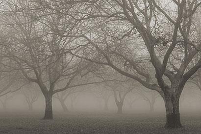 fog410