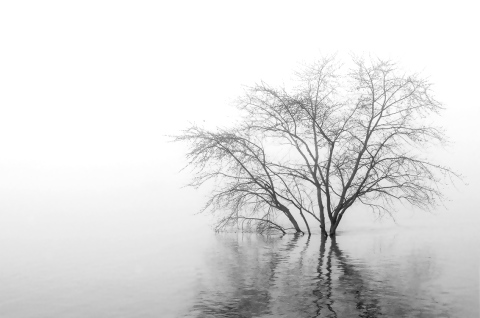 tree-in-water-and-fog-1-20111.jpg