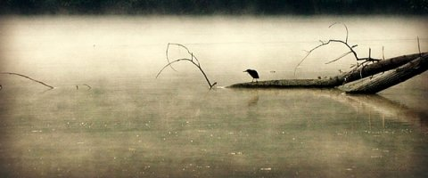 green-heron-in-dawn-mist-kathy-barney
