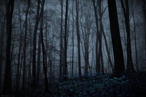 night_forest_by_lillianevill-d752tgm.jpg