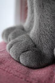 index cat paws