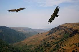images hawks